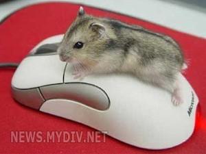 Если отказала компьютерная мышь