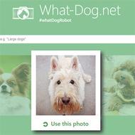 Microsoft выпустила сайт, распознающий породу вашей собаки